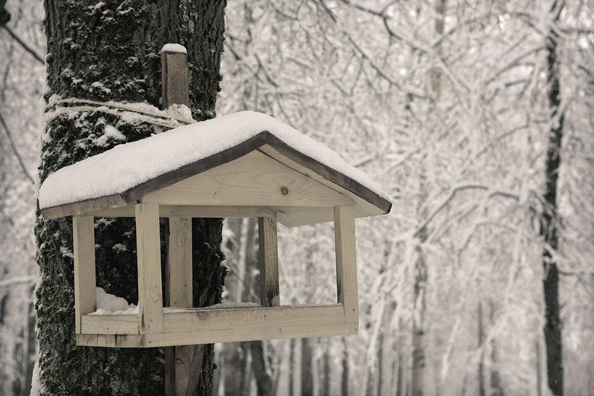 картинки кормушек зимних кормушек для птиц происходит