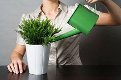 Полив комнатных растений. Как правильно поливать комнатные растения{q} Как спасти залитое растение{q}