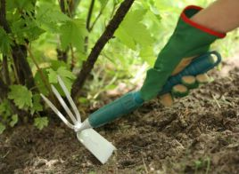 Внесение удобрений в почву. Правила
