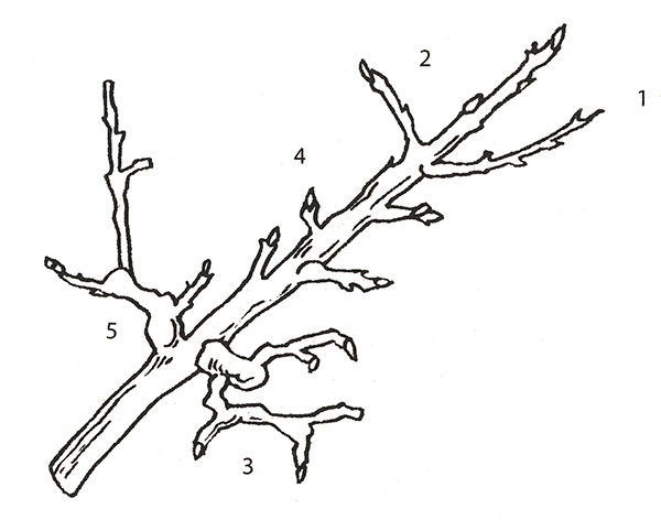 Деревья и ветки раскраска