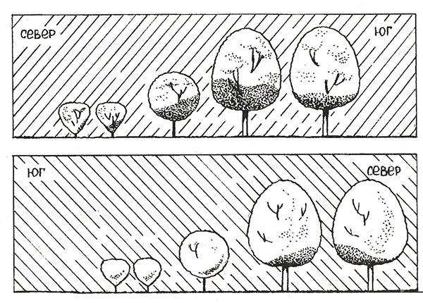 Ступенчатое размещение садовых