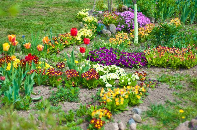Цветы весенние клумбы
