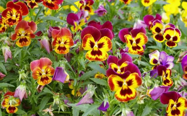 И название цветов в огороде фото