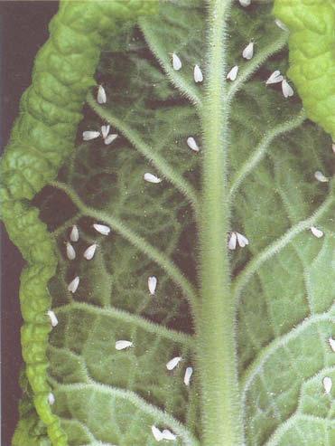 Как вырастить клубнику без сорняков