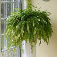 Комнатные растения и их влияние на