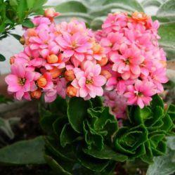 Комнатные растения – лекари. Какие растения помогают справиться с болезнями?