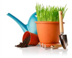 Дачные и садовые работы в апреле. Полезные советы и рекомендации опытного садовода