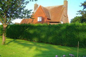 Как построить живую изгородь на даче