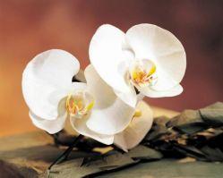 Пословицы и поговорки про растения