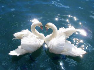 Мудрые мысли о любви и уважении