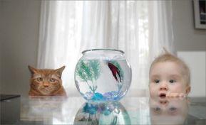 Как познакомить ребёнка с миром природы