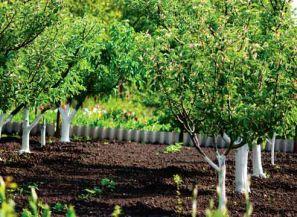 Размещение деревьев в саду