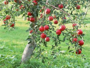 Какие сорта деревьев и кустарников выбрать для выращивания на даче