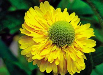 Цветы для осенней клумбы
