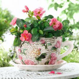 Какие растения не стоит заводить в доме?
