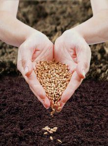 Сроки посадки семян на рассаду