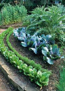 Несовместимость овощных культур при посадке